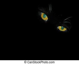augenpaar, blicken, katz