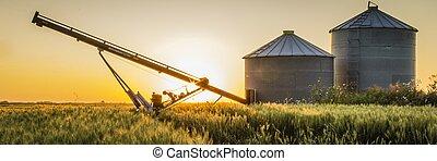 Auger and Grain Bins