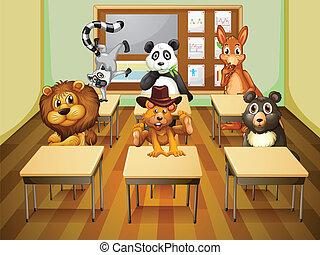 aula, aimals