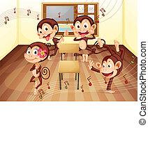 aula, monos