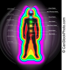 Auras and Chakras - Vector Illustration of Human Auras and...