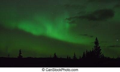 Aurora and Stars Alaskan Forest Rd