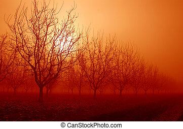 aurora arancia, dietro, noce, albero