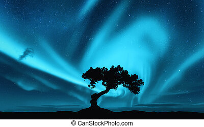 Aurora borealis and silhouette of a tree on the hill