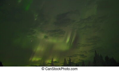 Aurora Borealis Treetops with Stars - Dazzling interplay of...