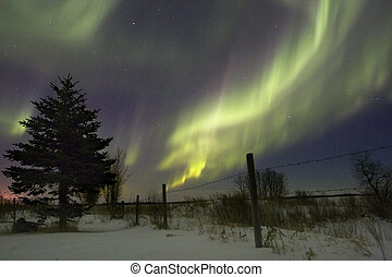 Aurora Borealis over fields, Gilbert Plains, Manitoba,...