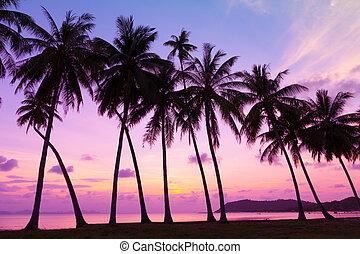 aus, bäume, tropische , handfläche, sonnenuntergang, meer, ...