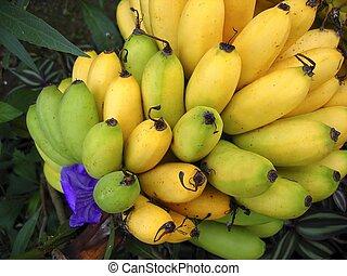 aus, gelbes grün, zweig, früchte, banane