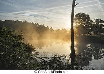 aus, nebel, see, landschaftsbild