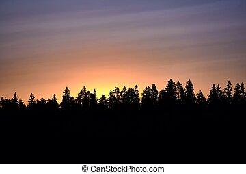 aus, Sonnenuntergang, Bäume