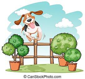 aus, springende , hund, zaun