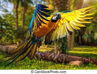 aus, tropische , papagai, hintergrund, bunter , schöne