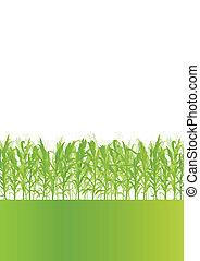 ausführlich, ökologie, landschaft, getreide, abbildung, feld, vektor, hintergrund, landschaftsbild