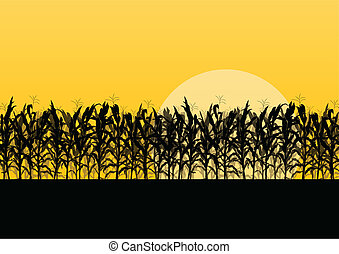 ausführlich, landschaft, getreide, abbildung, feld, vektor, ...
