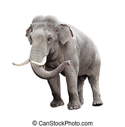 ausschnitt, freigestellt, elefant, included, pfad, weißes