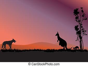 austrália, canguru