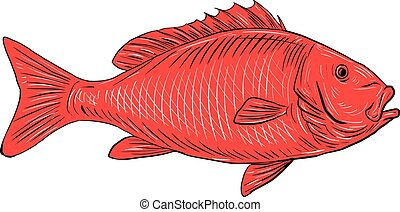 Australasian Snapper Swimming Drawing - Drawing sketch style...