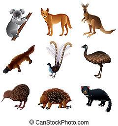australiër, vector, dieren, set