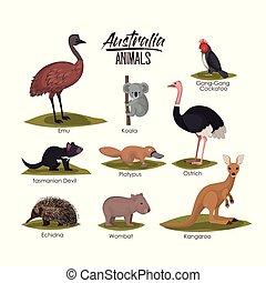 australia animals set in colorful silhouette