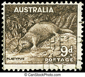 AUSTRALIA - CIRCA 1943 Platypus - AUSTRALIA - CIRCA 1943: A ...