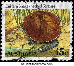 AUSTRALIA - CIRCA 1984 Eastern Snake-necked Tortoise