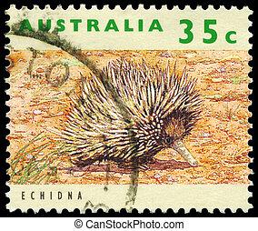 AUSTRALIA - CIRCA 1992 Echidna - AUSTRALIA - CIRCA 1992: A ...