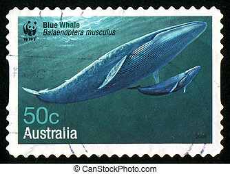 AUSTRALIA - CIRCA 2006: stamp printed by Australia, shows Blue whale, circa 2006