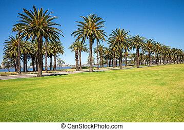 australia, fahren, bäume, handfläche, westlich, perth,...