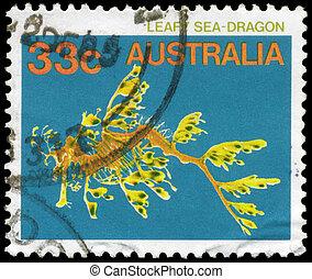 australia, -, hacia, 1984, dragón frondoso del mar