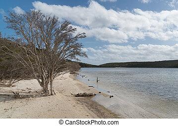 australia, national, fitzgerald, park, westlich, fluß