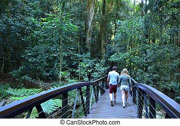 australia,  Park,  national,  Springbrook,  -,  Queensland