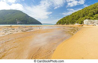 australia, playa, ensenada, sealers