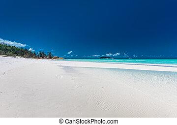 australia, sławny, whitehaven, queensland, whitsunday, plaża, wyspy