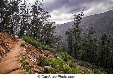 australia, sendero de excursión, nacional, promontorio, victoria, parque, wilsons
