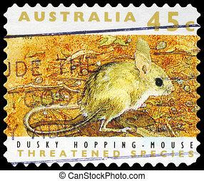 australia, springen, -, 1992, düster, zirka, maus
