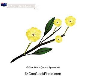 australia, zarzo, nacional, dorado, flor