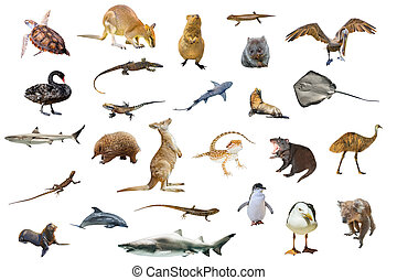 Australian animals isolated on white background:Wallaby, Tasmanian Devil, Wombat, Kangaroo, Quokka, Koala, Pelican, Seagull, Penguin, Swan, shark, Sting Ray, Turtle, Dolphin, Seal, Komodo dragon and Pogona.