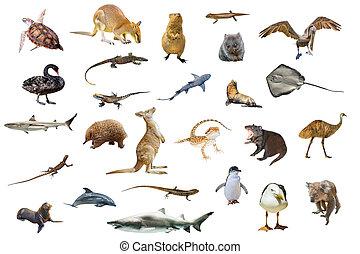 Australian animals isolated