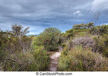 banksia landscape