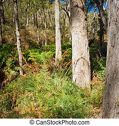 Scenic view into classic Australian bush