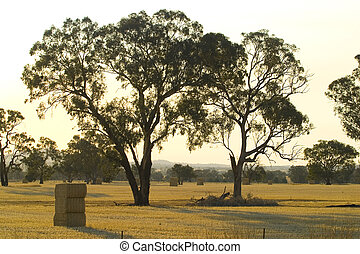 Australian dry landscape - A dead tree remains in a dry ...
