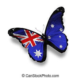 Australian flag butterfly, isolated on white