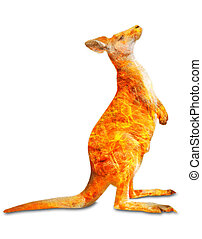 Australian kangaroo in the fire isolated - Composition about...