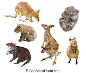 Australian marsupials isolated