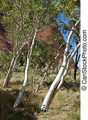 Australian Outback, Northern Territory, Australia