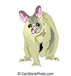Australian Realistic Possum Vector Illustration