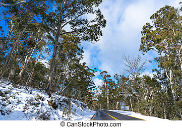 Australian road covered with snow with green eucalyptus trees on sides