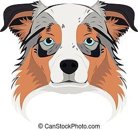 Australian Sheperd dog isolated on white background vector illustration