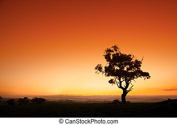 Australian Sunrise - Sun rises behind an Australian gum tree