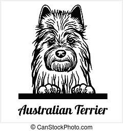 Australian Terrier - Peeking Dogs - breed face head isolated on white